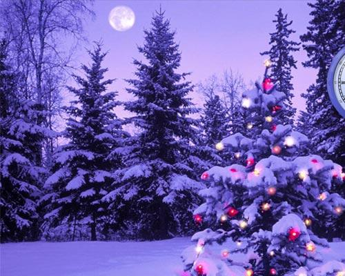 Bosco con neve_immagini_natale